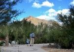New Desert Palm Oasis at Tohono Chul Park