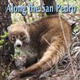San_Pedro_115