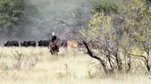 DD Gamble Cattle Roundup.