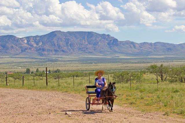 Rosemary driving a mini-horse cart at DD Gamble Guest Ranch.