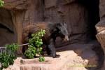 New black bear at Arizona-Sonora Desert Museum