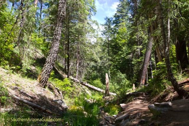 Marshall Gulch Trail along a creek.