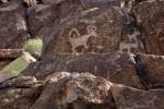Petroglyphs at Picture Rocks