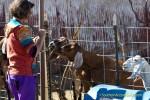 Ms. Karen feeds goats at Marcia's Garden