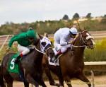Rillito Park Horse Races 2016