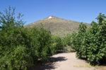 Mission Garden Tucson AZ