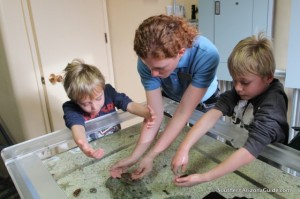 Boys and Touch Tank