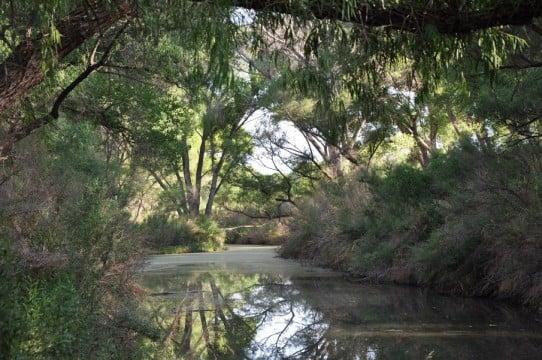 San Pedro River. Photo by Fran Hills.