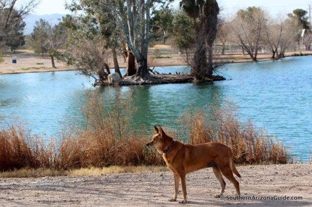 Tucson dog-friendly Columbus Park