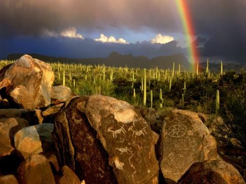 Petroglyphs: Saguaro Nat'l Park West.