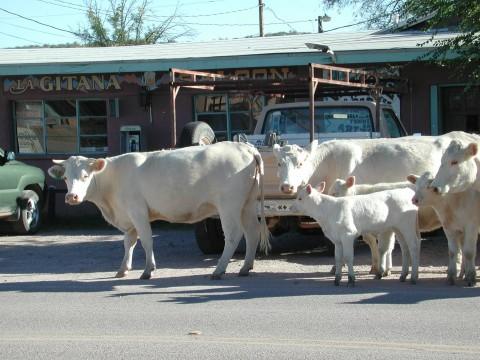 Main Street Arivaca AZ