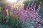 Tohono Chul Spring Wildflowers