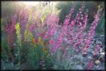 Tohono Chul Park: Spring Wildflowers.